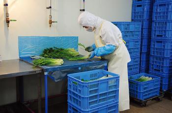 野菜の検品